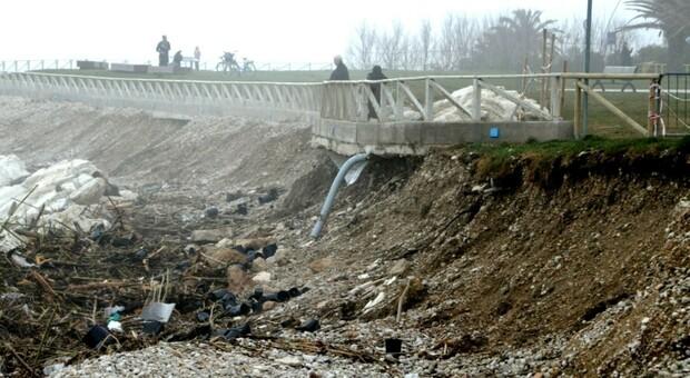 Strage di pecore vicino al fiume Tesino: sono stati uccisi almeno 10 capi