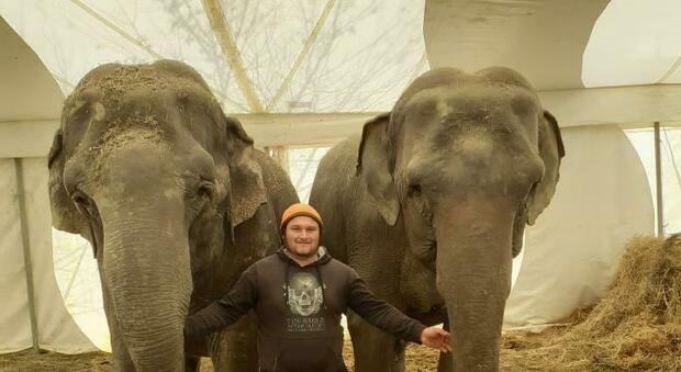 Circo bloccato in città da 20 mesi per il Covid: morto un elefante. E il sindaco accusa