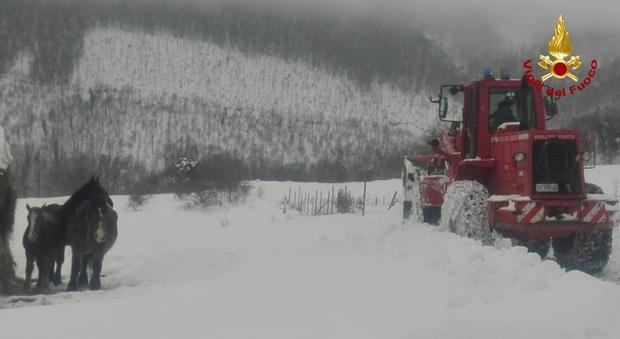 Un'odissea per raggiungere i cavalli rimasti isolati in mezzo alla neve