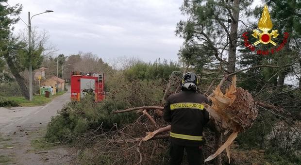 Vento lungo la costa e anche nelle zone collinari: alberi e rami caduti sulle strade